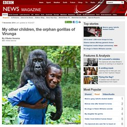 My other children, the orphan gorillas of Virunga
