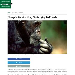 Chimp In Cocaine Study Starts Lying To Friends
