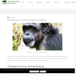Chimpancés y el uso de herramientas. Infografía.