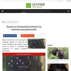 Ayumu, le chimpanzé surdoué à la mémoire exceptionnelle