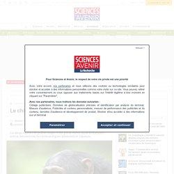 Le chimpanzé reluque, le bonobo regarde