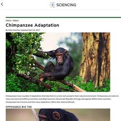 Chimpanzee Adaptation