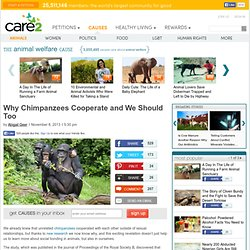 Why Chimpanzees Cooperate and We Should Too