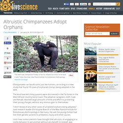 Altruistic Chimpanzees Adopt Orphans