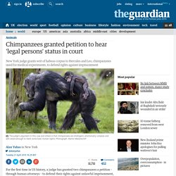 Chimpanzees granted petition to hear 'legal persons' status in court