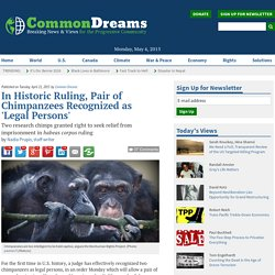 In Historic Ruling, Pair of Chimpanzees Recognized as 'Legal Persons'