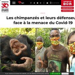 30 MILLIONS D AMIS 14/05/20 Les chimpanzés et leurs défenseurs face à la menace du Covid-19