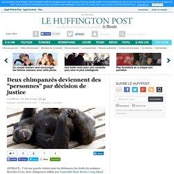 """Deux chimpanzés deviennent des """"personnes"""" par décision de justice"""
