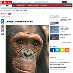 Chimps' Answer to Einstein