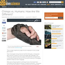 Chimps vs. Humans: How Are We Different?