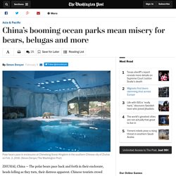 China's booming ocean parks mean misery for bears, belugas and more