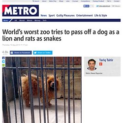 Zoo in China tries to pass off dog as a lion and rats as snakes