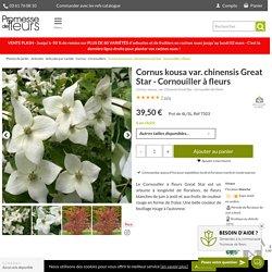 Cornus kousa var. chinensis Great Star – Cornouiller à fleurs blanches
