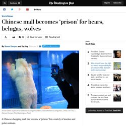 Chinese mall becomes 'prison' for bears, belugas, wolves