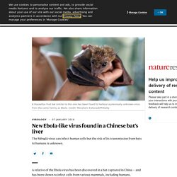 NATURE 07/1/19 New Ebola-like virus found in a Chinese bat's liver