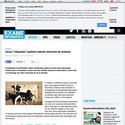 """Vacas """"chipadas"""" podem reduzir emissões de metano"""