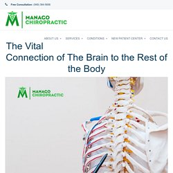 The Best Chiropractor in Mission Viejo Explains The Vital Connection of The Brain to the Rest of the Body