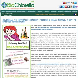 Chlorella- Natural Detoxification for Body Toxins, Heavy Metals, Your Key to Health!