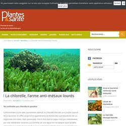 La chlorelle, l'arme anti-métaux lourds - Remèdes - Plantes & santé