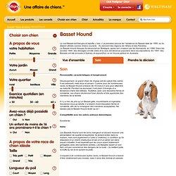 Choisir son chien - race de chien Basset Hound - Pedigree®