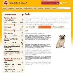 Choisir son chien - race de chien Carlin - Pedigree®