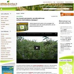 Choisir des cultures pérennes comme couvert végétal