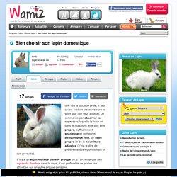 Bien choisir son lapin domestique - Acheter un lapin