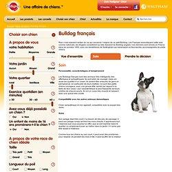 Choisir son chien - race de chien Bulldog français - Pedigree®