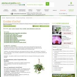 Choisir ses plantes d'intérieur en fonction de la pièce de la maison (Guides d'achat)