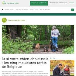 Et si votre chien choisissait : les cinq meilleures forêts de Belgique - Mon Animal et Moi