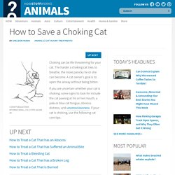 How to Save a Choking Cat: Tips and Guidelines: Cat Injury Treatments
