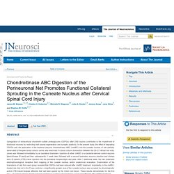 Chondroitinase ABC Digestion of the Perineuronal Net Promotes Functional Collateral Sprouting in the Cuneate Nucleus after Cervical Spinal Cord Injury
