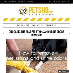 Choosing The Best Pet Stains and Urine Odors Remover