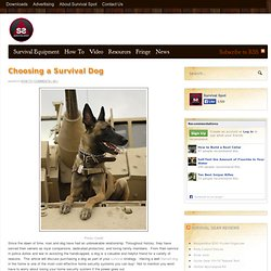 Would You Buy A Trained Survival Dog