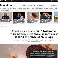 """Six choses à savoir sur """"Hyalomma marginatum"""", une tique géante qui se répand en France et en Europe"""