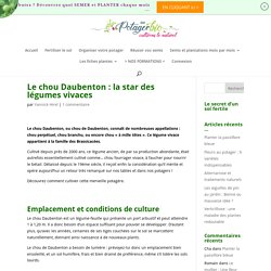 Le Chou Daubenton : la star des légumes vivaces