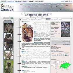 Chouette hulotte - Strix aluco