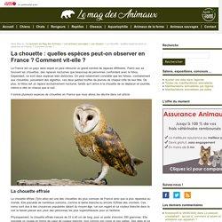 La chouette : quelles espèces peut-on observer en France ? Comment vit-elle ?