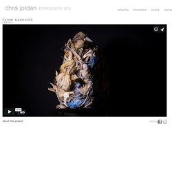 Chris Jordan - Camel Gastrolith