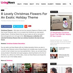 Awesome & Lovely Christmas Flowers For An Exotic Holiday Theme