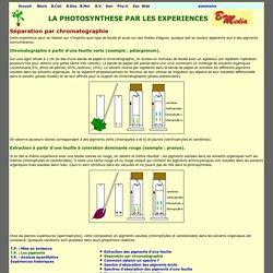 Chromatographie de pigments