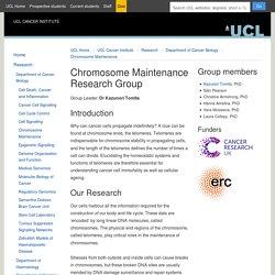 Chromosome Maintenance
