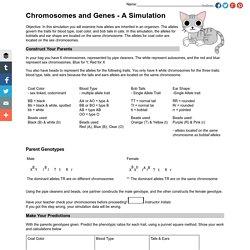 Chromosomes and Genes - A Simulation