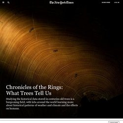 Chronicles of the Rings: What Trees Tell Us