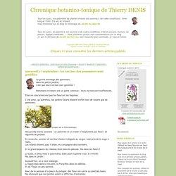 Chronique botanico-tonique de Thierry DENIS: mercredi 17 septembre : les racines des pommiers sont gentilles