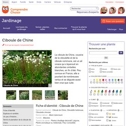 Ciboule de Chine: planter ou semer la ciboule de Chine