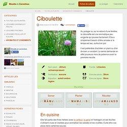 Ciboulette : Culture, multiplication et récolte au potager bio
