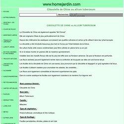Ciboulette de Chine ou allium tuberosum