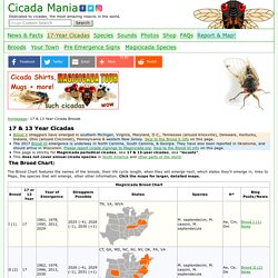 Periodical Cicada Broods & Maps
