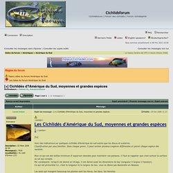 [+] Cichlidés d?Amérique du Sud, moyennes et grandes espèces : Amérique du Sud